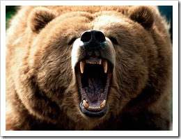 Grizzly Bears Attacks
